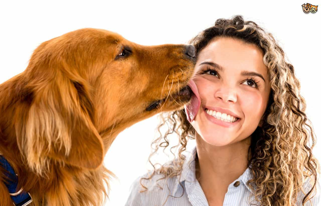 Letting Your Dog Lick Your Face Might Help Your Allergies
