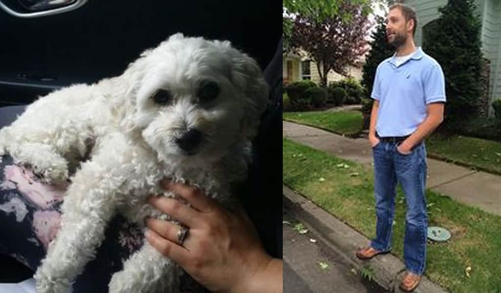 A Dog Fell 14 Stories, and a Stranger Caught It