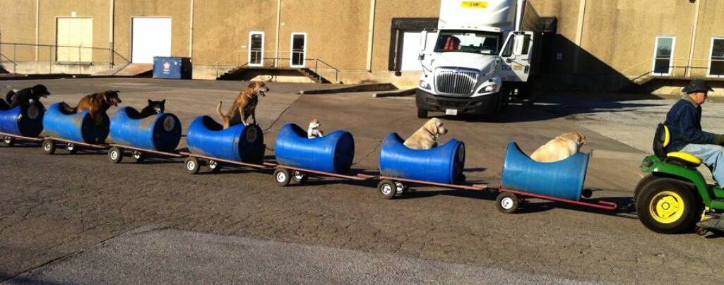Texas Man Builds 'Dog Train' To Take Rescued Pups Out On Little Adventures