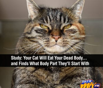 GROSS:  A Study Finds Your Cat Will Eat Your Dead Body... and Even Finds What Body Part They'll Start With 1