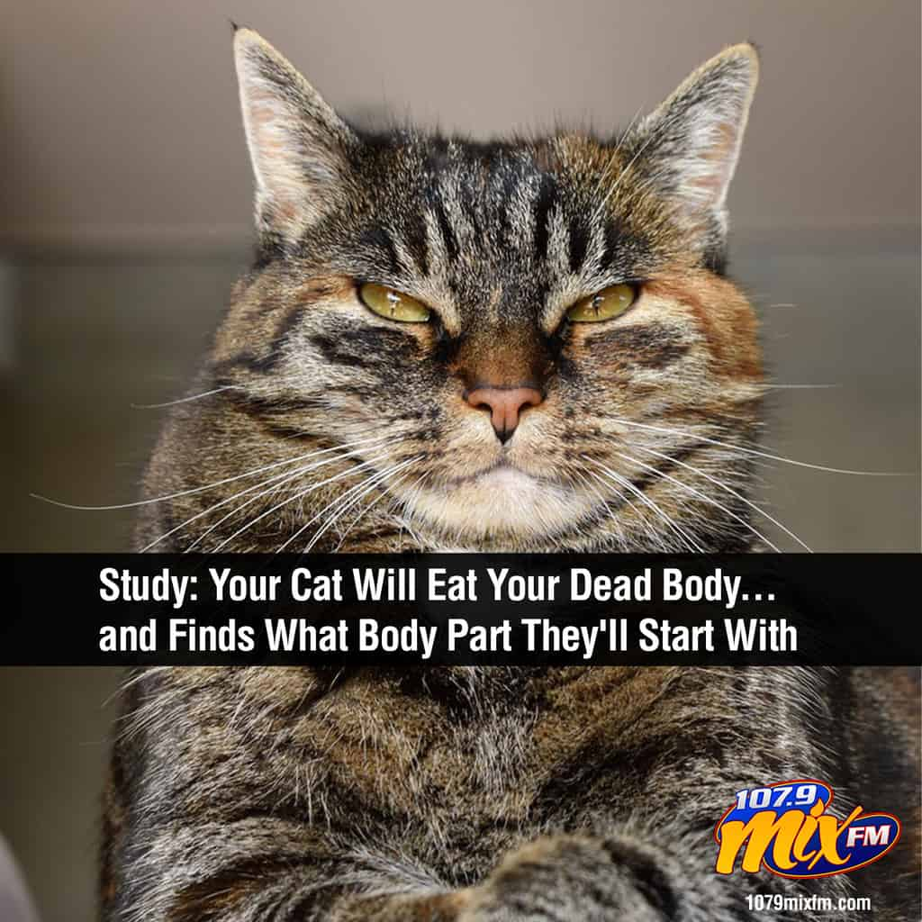 GROSS:  A Study Finds Your Cat Will Eat Your Dead Body… and Even Finds What Body Part They'll Start With