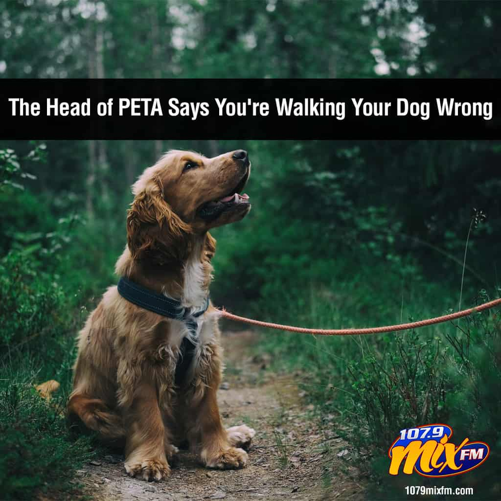The Head of PETA Says You're Walking Your Dog Wrong
