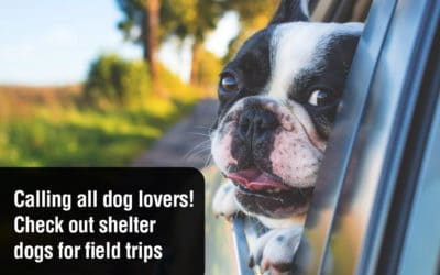 Calling all dog lovers! Shelter dogs taking field trips
