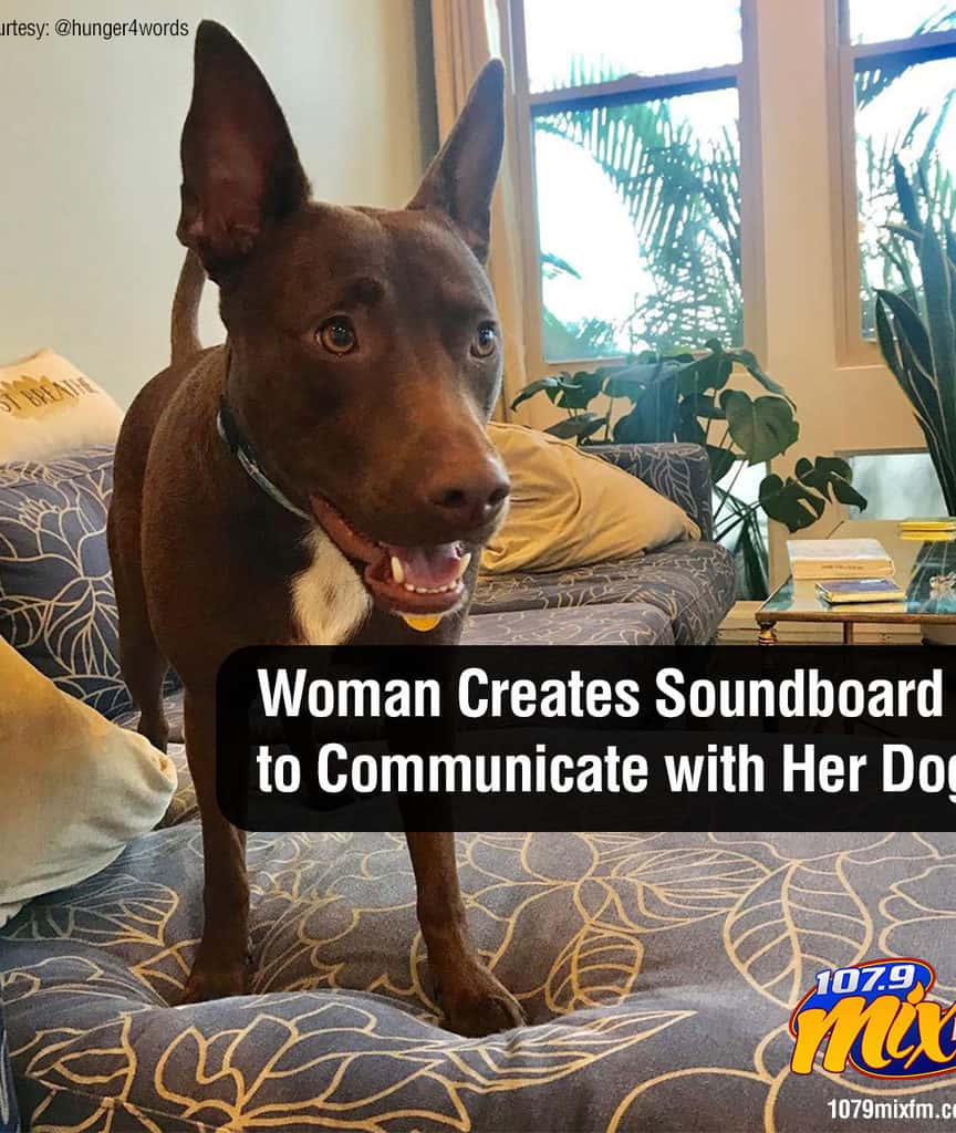 Woman Creates a Soundboard to Communicate with Her Dog