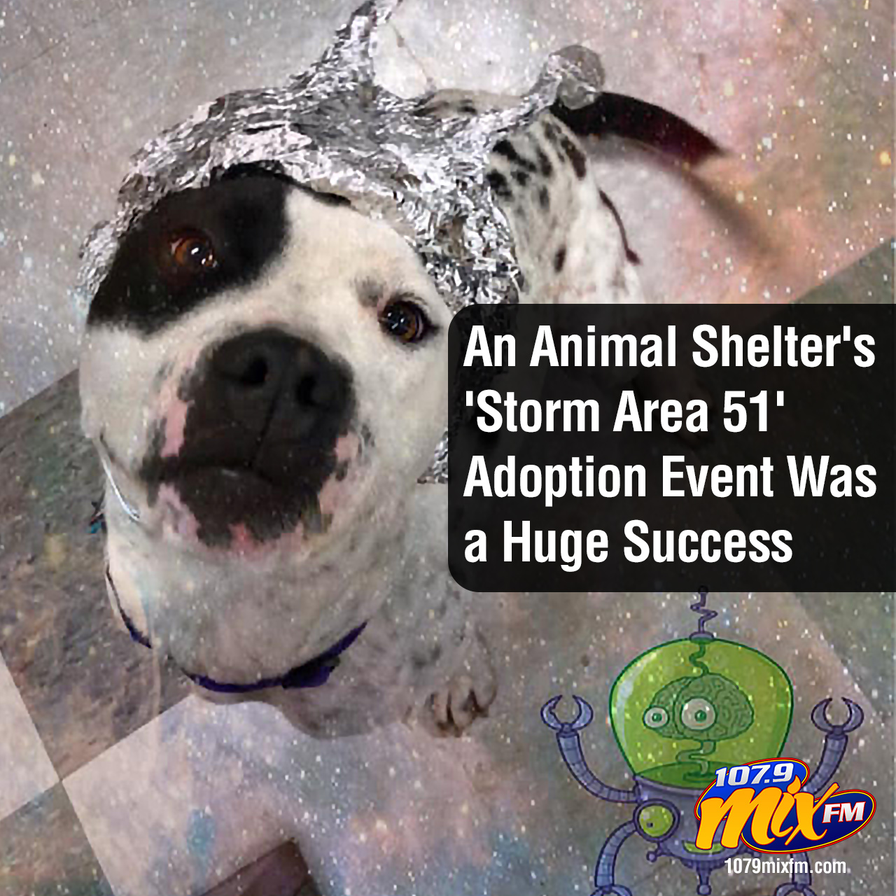 An Animal Shelter's 'Storm Area 51' Adoption Event Was a Huge Success