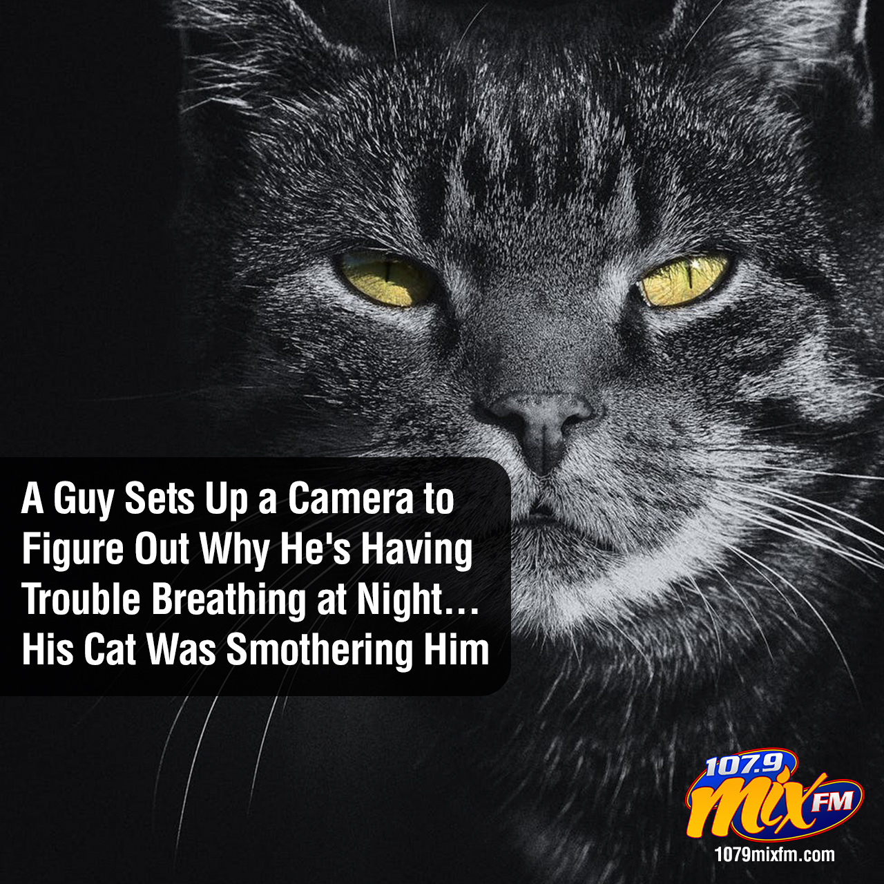 A Guy Sets Up a Camera to Figure Out Why He's Having Trouble Breathing at Night… His Cat Was Smothering Him