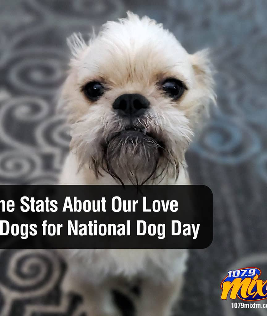 Nine Stats About Our Love of Dogs for National Dog Day