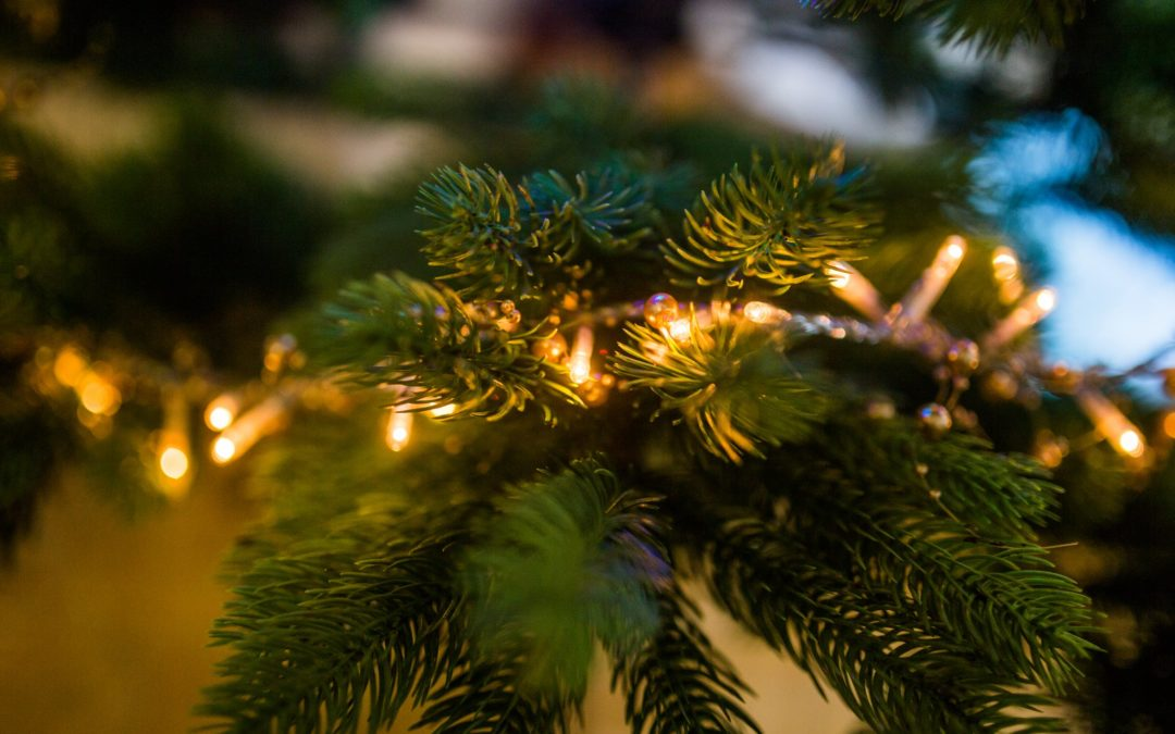 Here Are the Best and Worst Times to Buy a Christmas Tree