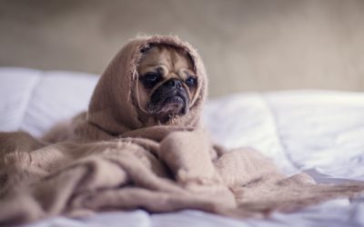 Top Ten Ways People Use Their Dogs to Spot Red Flags in Their Dates