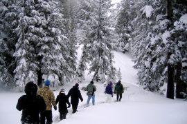 snowshoe, cascade range