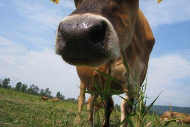 Cherry Valley Dairy