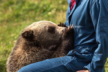 Bear Research, Education, and Conservation Center