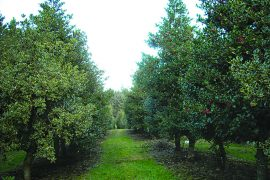 Henderson Holly Farm