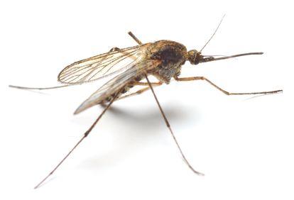 Salud-Zika-Dengue-Chikungunya