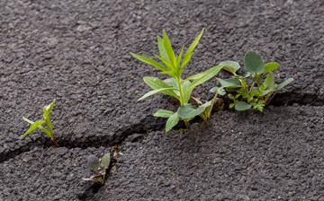 Weeds in an asphalt driveway