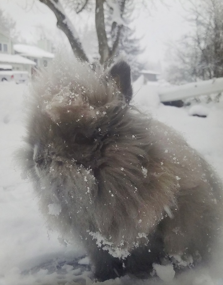3264-chewy-in-the-snow.jpg
