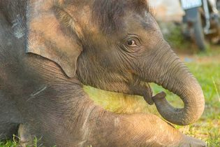 Vietnam Elephant Initiative