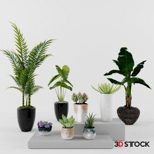Plant 19