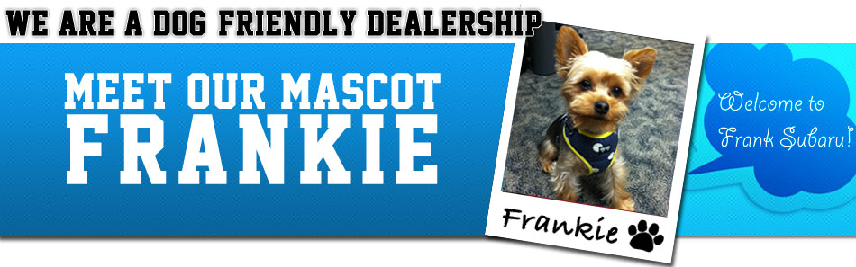 Come Meet Frankie at our Dog Friendly Subaru Dealership in San Diego, California!