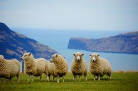 Find free New Zealand itineraries