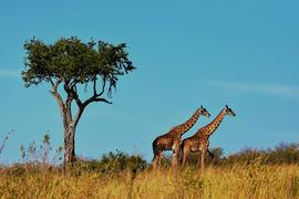 Find free Tanzania itineraries