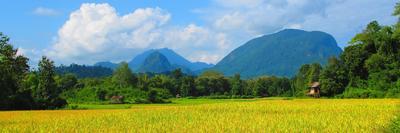 Laos field