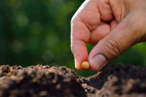 Sowing to the Spirit (Galatians 6:6–10)