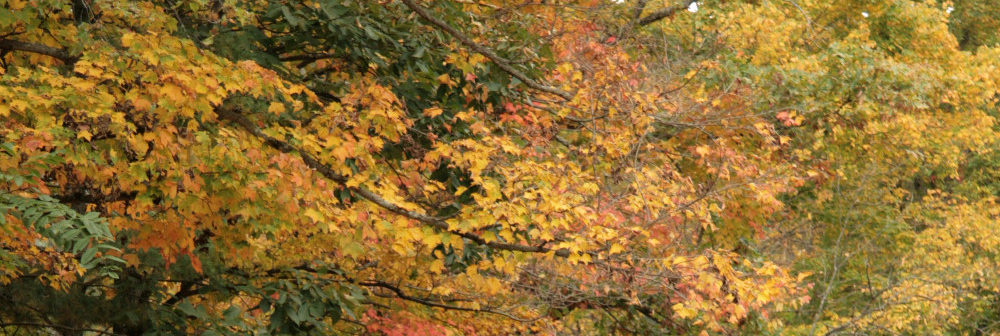 October_2008_015-2-b