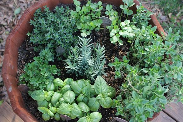 Dyrk urter og planter hjemme hele året