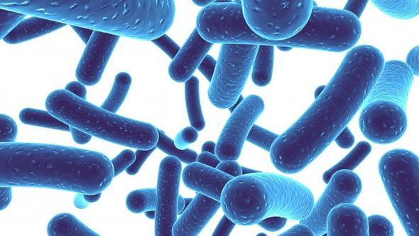 Balanserte bakterier er sunt og viktig for god helse og fordøyelse