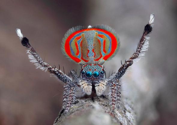 Edderkoppene har nøkkel til forståelse av naturens mekanismer