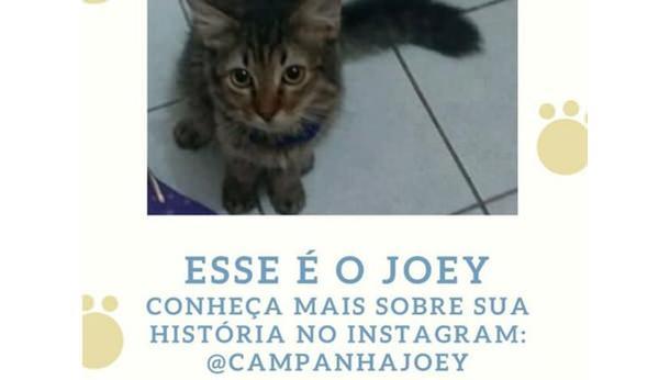 Campanha Para o Tratamento do gato Joey