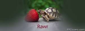 rawr turtle Facebook Cover Photo