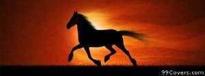 running horse Facebook Cover Photo