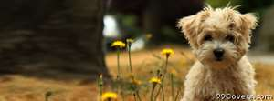 Nature flower cute animals dogs funny puppy Facebook Cover Photo