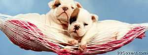 hammock puppies Facebook Cover Photo