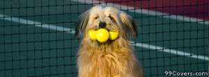 tennis ball dog Facebook Cover Photo