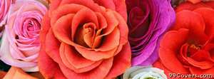 pinks purple red rose Facebook Cover Photo