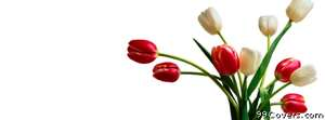 tulip bouquet Facebook Cover Photo
