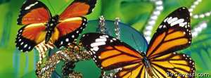 butterflies in jewelry Facebook Cover Photo