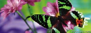 green stripy butterfly Facebook Cover Photo
