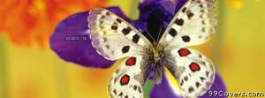 close up butterfly Facebook Cover Photo