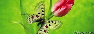 green butterfly Facebook Cover Photo