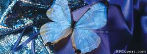 blue butterfly Facebook Cover Photo
