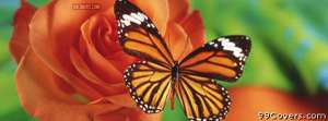 butterfly and orange flower Facebook Cover Photo