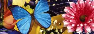 blue butterfly pink flower Facebook Cover Photo