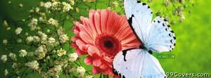peach flower blue buterfly Facebook Cover Photo