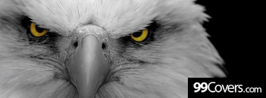 bald eagle Facebook Cover Photo