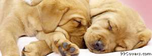 dogs cuddling Facebook Cover Photo