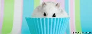 mouse cupcake Facebook Cover Photo